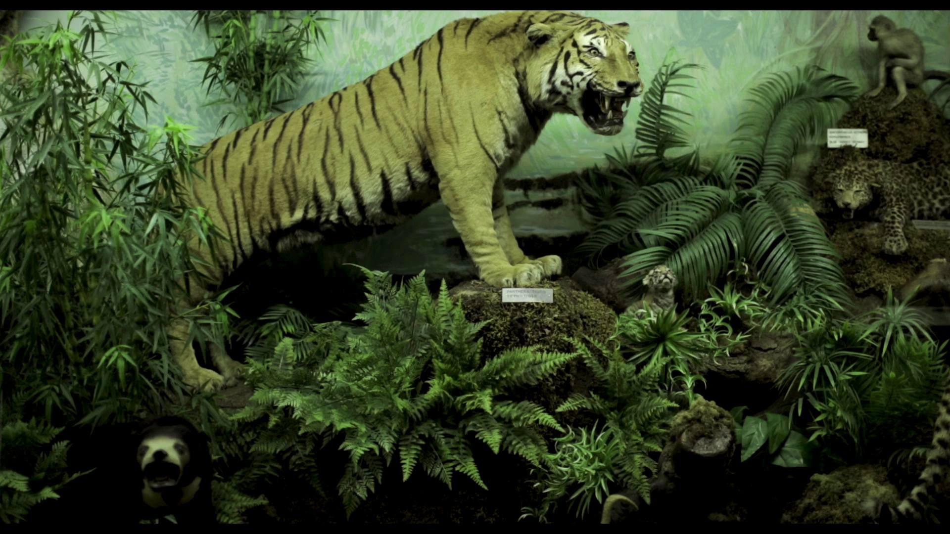 tiger 200 kb